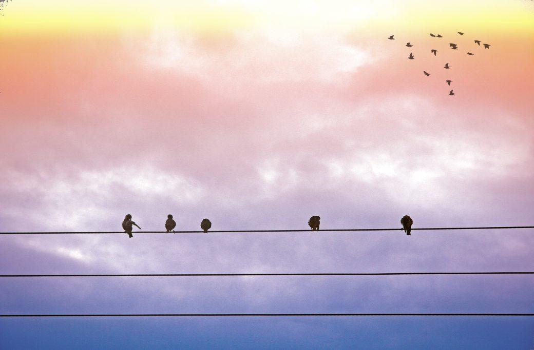 animals-birds-clouds-162196.jpg